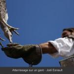 JE Atterrissage sur une gant_2012-09-22_126_L1000px+Titre