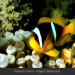 RD Poisson Clown